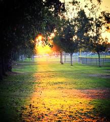 setting sun (N@ncyN@nce) Tags: california park light sunset sun green grass vanishingpoint twilight dusk perspective socal southerncalifornia sunbeam sandimas sangabrielvalley marchantpark