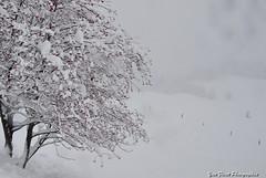 Image d'hiver en Savoie. (yves floret) Tags: savoie neige hiver froid arbres sorbiers couleurs brouillard revard
