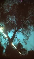 Ombre e tramonto (Roderick Usher) Tags: storiediunastelladiurna boxkodakn°2a cartailford tramonto set glialberi la fine del giorno solarizza polvereeimprontadigitale