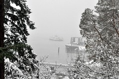 Ferry in the Mist 2 (Tynan Phillips) Tags: ocean winter white snow seascape canada cold ice nature water bc britishcolumbia canadian snowing denmanisland snowfall bcferries snowed