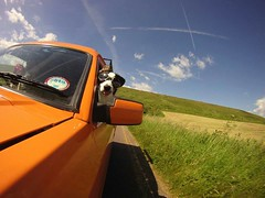 Zephyr, Border Collie wearing Doggles (Mk3stargazer Isle of Wight) Tags: collie border isleofwight zephyr doggles