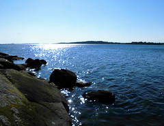Eftermiddagsdopp i havet (Charly Hund) Tags: sea dog nature water strand swimming natur charly vatten hav blekinge aspan dansksvensk gårdshund