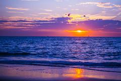Scheveningen (Flavie Denelle - Photography) Tags: pink blue sea summer sun mer holland beach netherlands rose strand evening soleil scheveningen nederland zee denhaag bleu zomer avond plage ete joli hollande lahaye