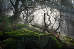 Enter the Forest 2 (J C Mills Photography) Tags: wood autumn trees light mist tree forest woodland landscape moss oak rocks derbyshire peakdistrict bracken rays sunbeam
