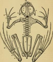 Anglų lietuvių žodynas. Žodis cartilaginous tube reiškia kremzlinėms vamzdis lietuviškai.