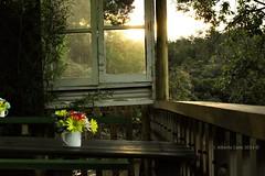 Un lugar en la montaña (JACCO // Urbano) Tags: flores luz atardecer ventana árboles santaelena balcon mesa tarde