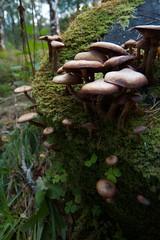 Eighe Wild Mushrooms (itmpa) Tags: wild tree slr canon mushrooms naturereserve stump funghi nophotoshop carpark unedited 30d canon30d straightfromthecamera a832 beinneighenaturereserve coillenaglasleitire coillenaglasleitir