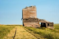 Bingo Grain Co. -2 (nikons4me) Tags: old building abandoned overgrown southdakota decay elevator grain smalltown decaying tallgrass okaton nikonafsdxnikkor35mmf18g nikond7100 bingograinco