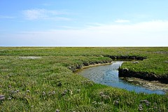 salt marsh ()'(stefanie) Tags: germany island nationalpark unescoworldheritagesite unesco wattenmeer spiekeroog waddensea