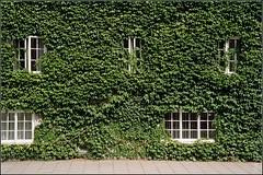 Ivy (FlickrDelusions) Tags: film kodak ivy oxford oxfordshire broadstreet kodakcolorplus200 olympusaz300superzoom kodak2008