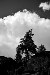 Great Clouds Roll Over the Hills (North Lands Photography) Tags: sky blackandwhite bw tree vertical clouds landscape landscapes blackwhite rocks wenatchee lowkey bastille bwphotography leavenworth blackandwhitephotography leavenworthwashington iciclecreek wenatcheewashington wenatcheenationalforest bwlandscapes verticallandscape bwlandscape blackandwhitelandscape blackandwhitelandscapes iciclecreekroad verticallandscapephotography verticalphotography
