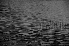 (rhianna.mellor) Tags: blackandwhite bw white lake ontario canada black color colour water monochrome digital river photography 50mm mono waterfall pond nikon mine none no guelph georgetown h2o hills chrome milton non brampton rhianna mellor halton 105mm rhiannamellor