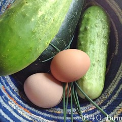 "I love this time of year. A walk out to the coop and garden provided a few cucumbers, a zucchini, fresh herbs, and a collection of fresh eggs. On a day like today, our basket is a lot more than just an egg basket!  What are you harvesting from your garden • <a style=""font-size:0.8em;"" href=""http://www.flickr.com/photos/54958436@N05/14775366876/"" target=""_blank"">View on Flickr</a>"