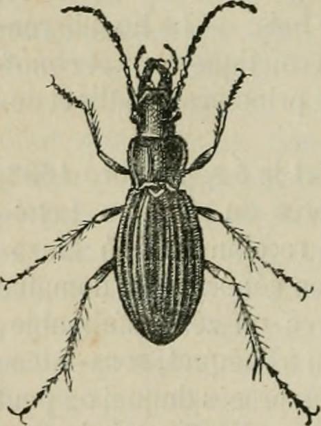 Image from page 108 of Dictionnaire de conversation à lusage des dames et des jeunes personnes : ou, Complément nécessaire de toute bonne éducation (1841)