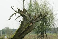 DSC06420 (Ton Smilde) Tags: oostvaardersplassen naturereserveinthenetherlands