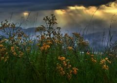 The magic of light (heinrich_511) Tags: clouds rays sun blue magic heartbeat heart
