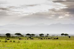 Kidepo National Park, Uganda (hansdebruyne) Tags: vakantie afrika uganda