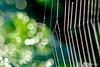 Web, Drops & Bokeh
