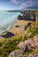 Hello Summer (Ray Bradshaw.) Tags: sea summer sunlight seascape beach sand coastline watersedge wildflower scenics bedruthansteps beautyinnature cornwallengland colourimage tiekieraymondbradshawphotography