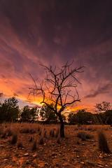 Desolation. (dasanes77) Tags: longexposure sunset sky orange tree clouds landscape dawn dramaticsky desolation apocalyptic samyang canoneos6d ultrawideopen