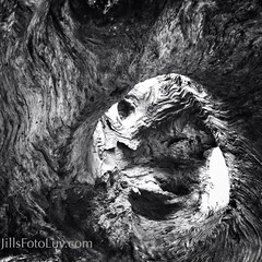 What Do You See? (jillsfotoluv) Tags: wood old abstract tree nature lines circle natural perspective vision worn trunk