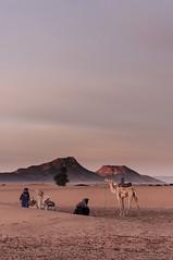 Berber Morning (hoagie_mcfly) Tags: desert camel morocco berber marokko kamel wste