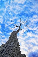 Changing weather (Kansas Poetry (Patrick)) Tags: sky tree kansas lawrencekansas patrickemerson patricknancyhaveapuppy
