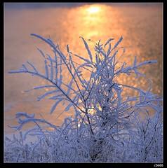 nEO_IMG_DP1U8670 (c0466art) Tags: world city trip morning travel trees light lake cold ice beautiful weather canon wonderful landscape scenery view chinese area northeast 2014 1dx 大慶 c0466art 新華湖
