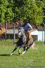 Cavalos Crioulo (Venicius Follmann de Oliveira) Tags: riograndedosul gaucho missões matoqueimado cavalocrioulo abccc tirodelaço caibaté veniciusfollmanndeoliveira
