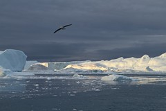 Ilulissat icefjord (Greenland Travel) Tags: travel snow bird ice greenland iceberg icebergs ilulissat greenlandtravel