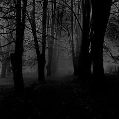 Invisible path (Sappho et amicae) Tags: park eve bw mist canon dark path eljkagavrilovi