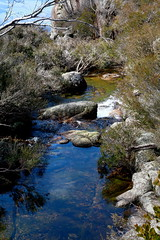 Crystal Brook - water so pure.... (Lesley A Butler) Tags: australia victoria granite geology mountbuffalo northeastvictoria parksvictoria mountbuffalonationalpark 201497