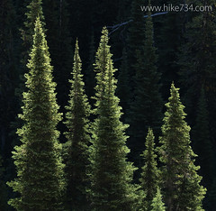 "Subalpine Fir • <a style=""font-size:0.8em;"" href=""http://www.flickr.com/photos/63501323@N07/15228559181/"" target=""_blank"">View on Flickr</a>"