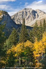Mount Timpanogos (Utah Images - Douglas Pulsipher) Tags: travel autumn mountain mountains color tourism beautiful forest utah ut colorful mt fallcolors scenic rocky sunny canyon cliffs boulders craggy alpine valley evergreens summit aspens geology wilderness aspen crags range forests pinetrees rugged mts conifers steep spruces timp alpineloop highaltitude conifer glacial massif geological crag scenicbyway wasatchmountains mounttimpanogos forested sprucetrees alpinescenicloop cottonwoodsleaves destinationscenery pines steep
