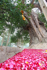 India_0465