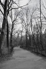 Central Park - New York (Natalia Rosalez) Tags: newyorkcity snow centralpark harlem manhattan