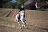 odile cheval-151 (@lvr) Tags: horse cheval nikon belgique 70200 chevaux d4s