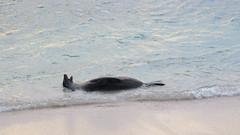 Galapagos - San Cristobal-30