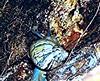 29-09-2014 (8) (TRM2016) Tags: aruá caramujos gastrópodes