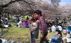 "Hanami 2012 • <a style=""font-size:0.8em;"" href=""http://www.flickr.com/photos/127933889@N02/15391641475/"" target=""_blank"">View on Flickr</a>"