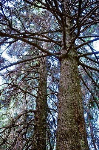 Drzewa z innej bajki / Trees from another fairy tale