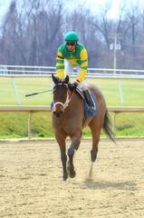 "2017-03-03 (22) r1 Julian Pimentel on #3 I Just Wanna Win (JimFleenor) Tags: photos photography md maryland laurelpark marylandracing horseracing jockey جُوكِي ""赛马骑师"" jinete ""競馬騎手"" dżokej jocheu คนขี่ม้าแข่ง jóquei žokej kilparatsastaja rennreiter fantino ""경마 기수"" жокей jokey người horses thoroughbreds equine equestrian cheval cavalo cavallo cavall caballo pferd paard perd hevonen hest hestur cal kon konj beygir capall ceffyl cuddy yarraman faras alogo soos kuda uma pfeerd koin حصان кон 马 häst άλογο סוס घोड़ा 馬 koń лошадь outside outdoors winner julianpimentel"