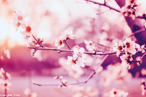 Mientras haya en el mundo primavera,
