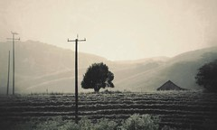 F4.1a3 (JOSEPHMAZZUCCO) Tags: rural farmland hills