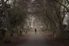 At Peace (Glenn D Reay) Tags: cemetary graves dark moody trees avenue path pentaxart pentax k30 sigma1770hsm glennreay