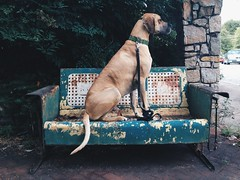 152/365 (moke076) Tags: atlanta portrait dog oneaday animal mobile metal vintage pose georgia furniture side great profile rusty cellphone cell posed moose swing couch patio fawn rocker photoaday dane 365 glider crusty cabbagetown iphone 2014 project365 365project vsco vscocam