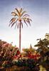 Hotel du Cap d'Antibes (john weiss) Tags: camera trees portrait france garden geotagged hotel earth smudge places palm human geo edits capdantibes frenchriviera minoltaxe7 hotelducap labn labcfk rgbautocolor geo:lat=4354844702 geo:lon=712107182
