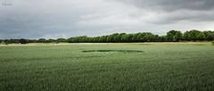 Graancirkel (HdB1973) Tags: netherlands zeiss circle sony crop carl alpha za carlzeiss graancirkel nld a65 sal1680z variosonnar16803545za minoltaamount provincienoordbrabant geosetter oudgastel variosonnartdt35451680