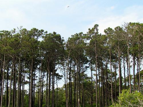 19 Trees Harkers Island NC 9781