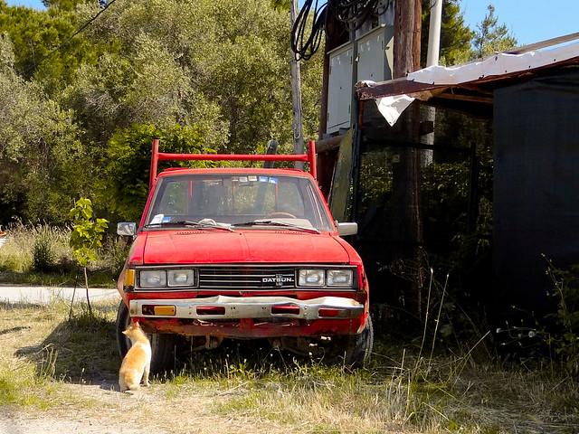 abandoned cat truck nissan pickup explore greece katze griechenland kedi datsun chalkidiki yunanistan afytos ozan afitos ελλάδα camionette explored kallithea χαλκιδική datsun1200 kamyonet ozandanışman datsuntruck καλλιθέα άφυτοσ ozandanisman datsun720 nissan720